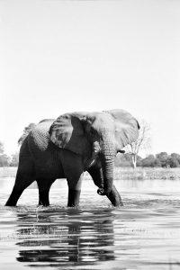River Elephant - ©Lysander Christo