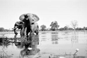 Lake Elephants - ©Lysander Christo