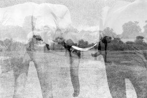 Elephant Landscape - ©Lysander Christo